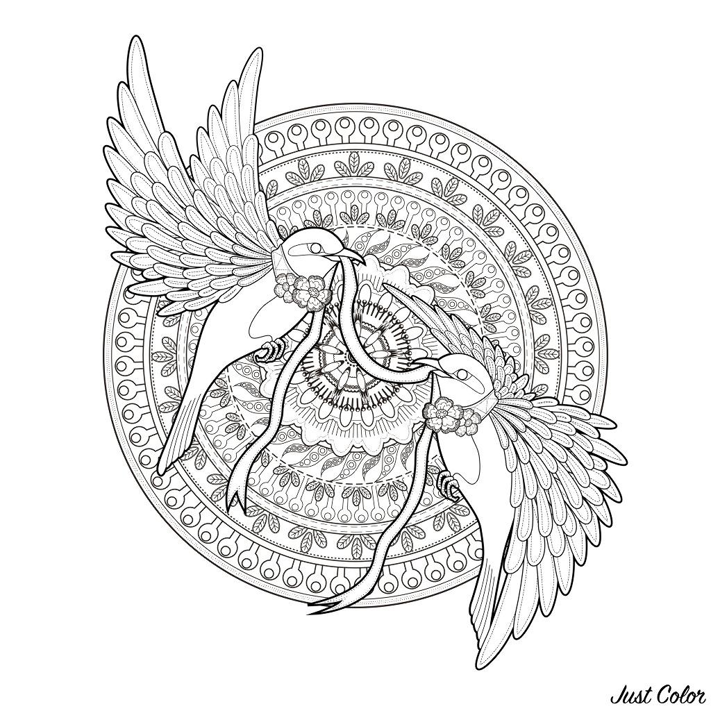 Malbuch Fur Erwachsene  : Vögel - 11