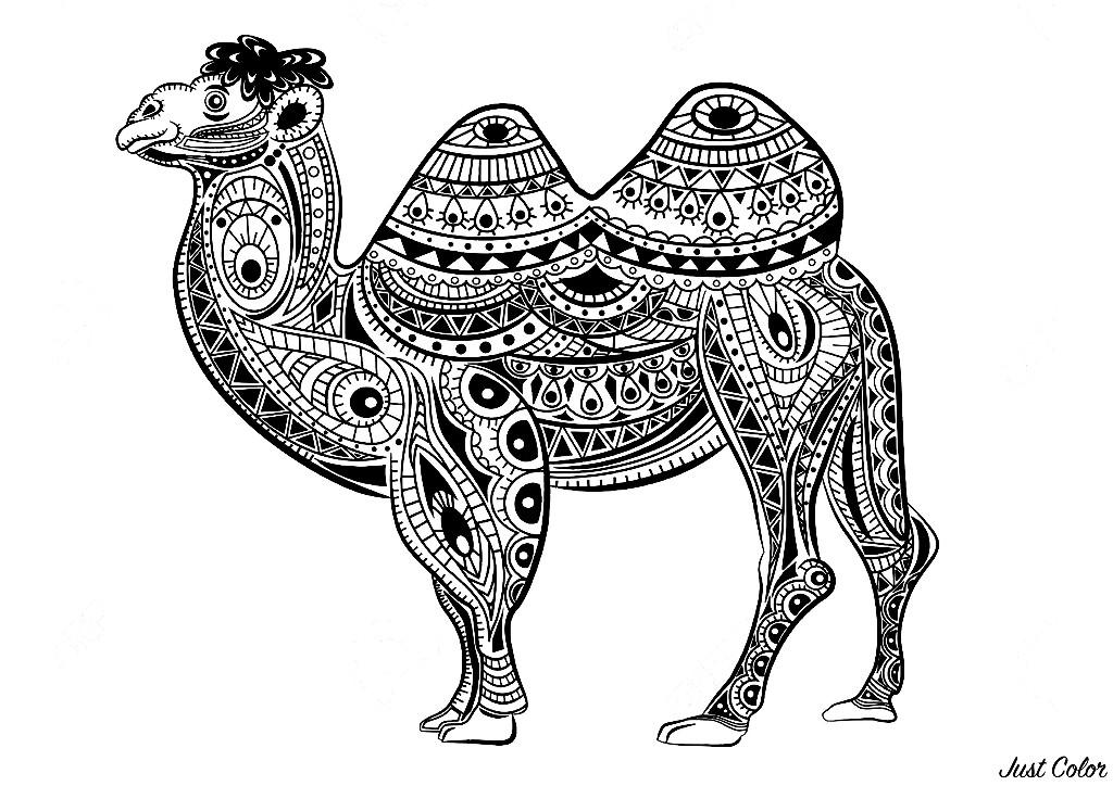 Malbuch Fur Erwachsene : Kamele & dromedare - 3