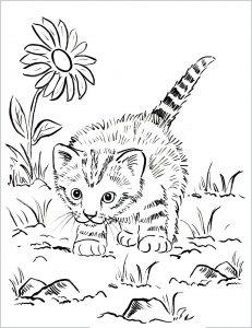 Katzen 1123