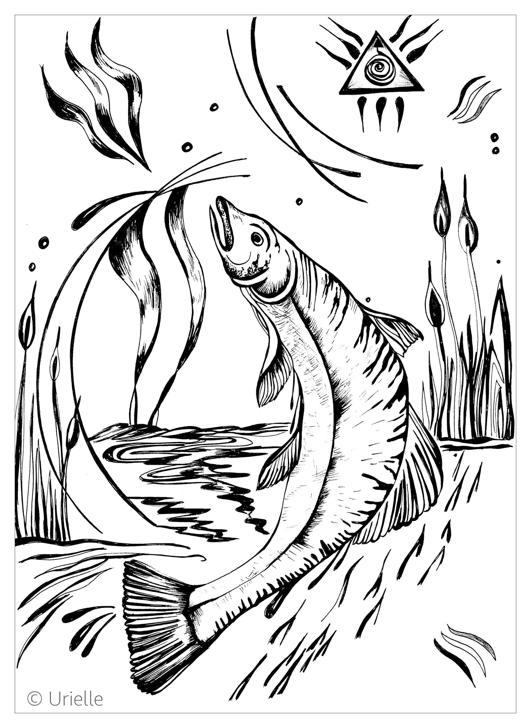 Malbuch Fur Erwachsene  : Fische - 20