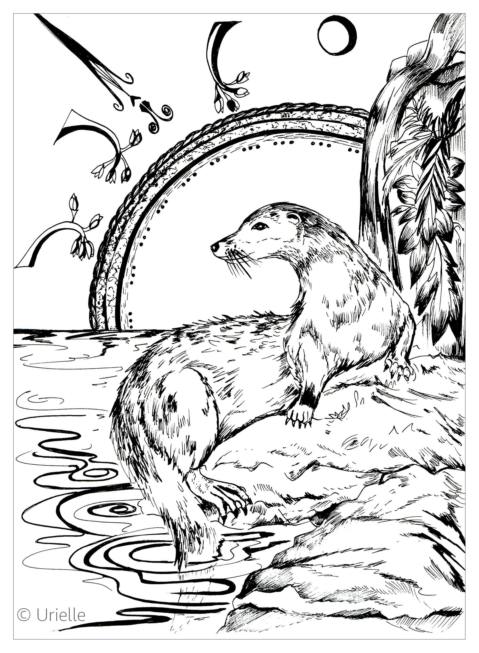 Malbuch Fur Erwachsene  : Fische - 7