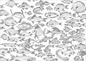 Fische 25343