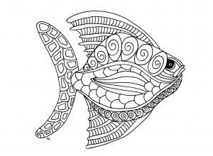 Fische 53200