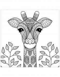 Giraffen 70659