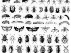 Insekten 26023