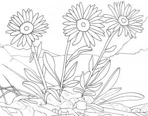 Blumen 74608