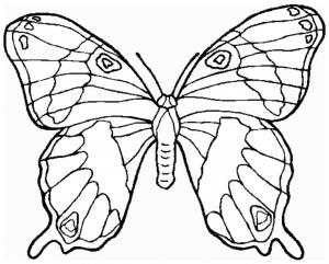 Insekten 54498