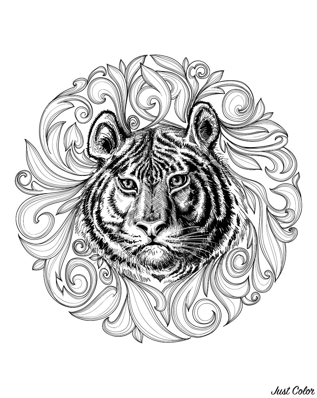Malbuch Fur Erwachsene  : Tigers - 2