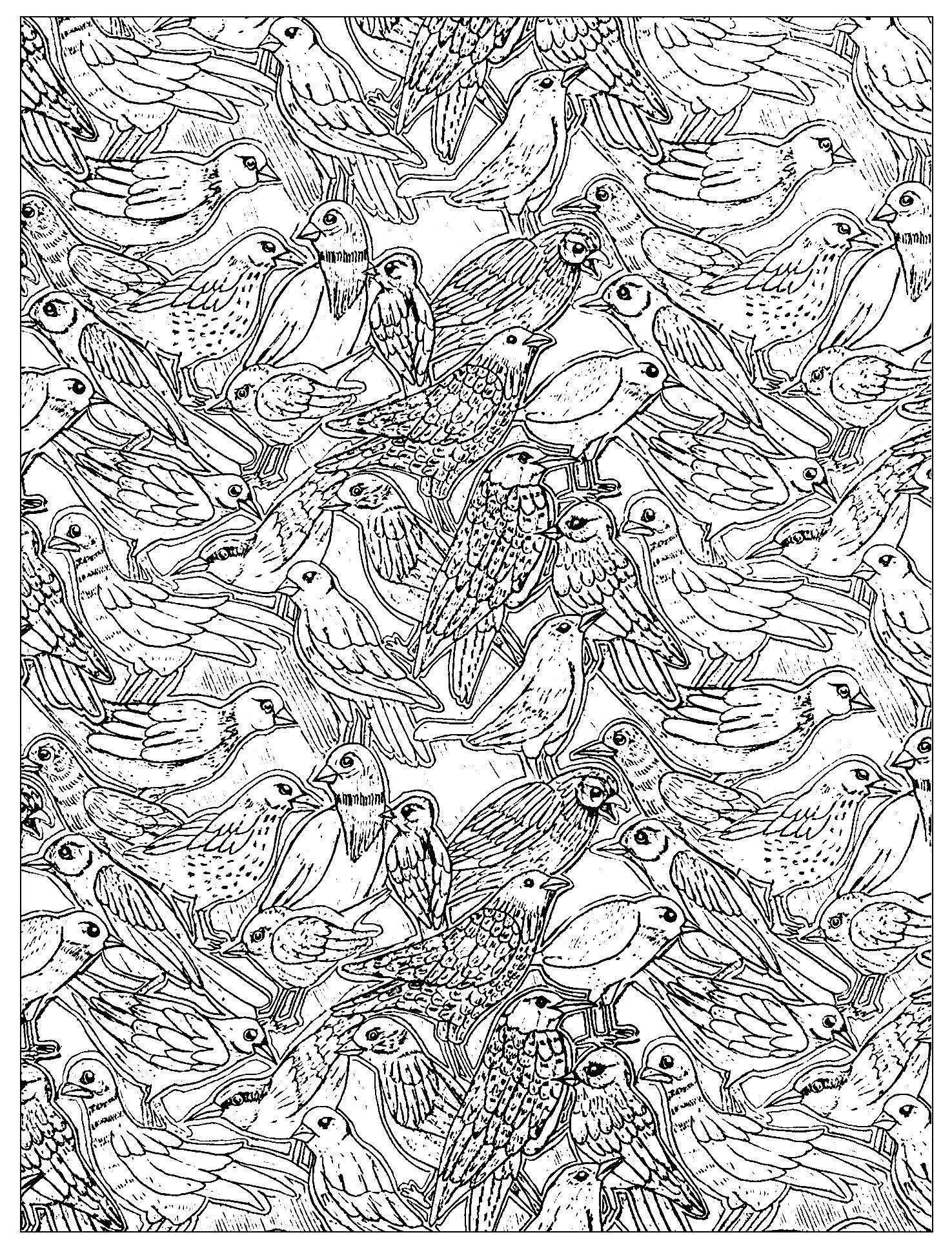 Colorear para adultos  : Aves - 26