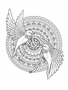 Aves 24660