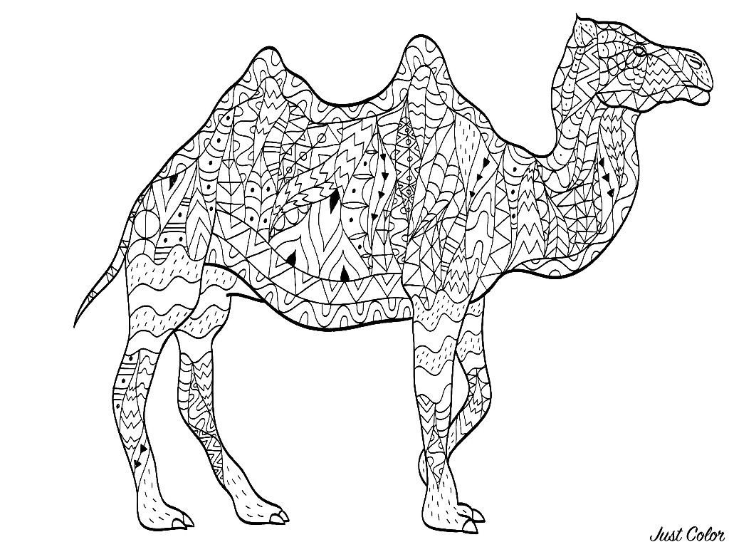 Colorear para Adultos : Camellos & dromedarios - 2
