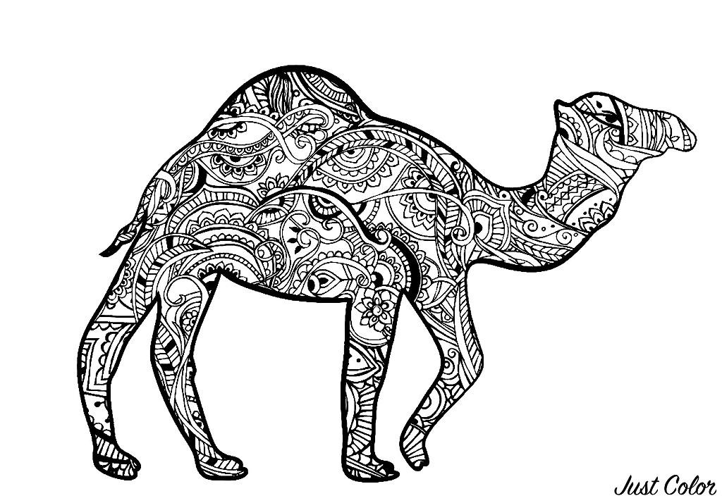Colorear para adultos  : Camellos & dromedarios - 1