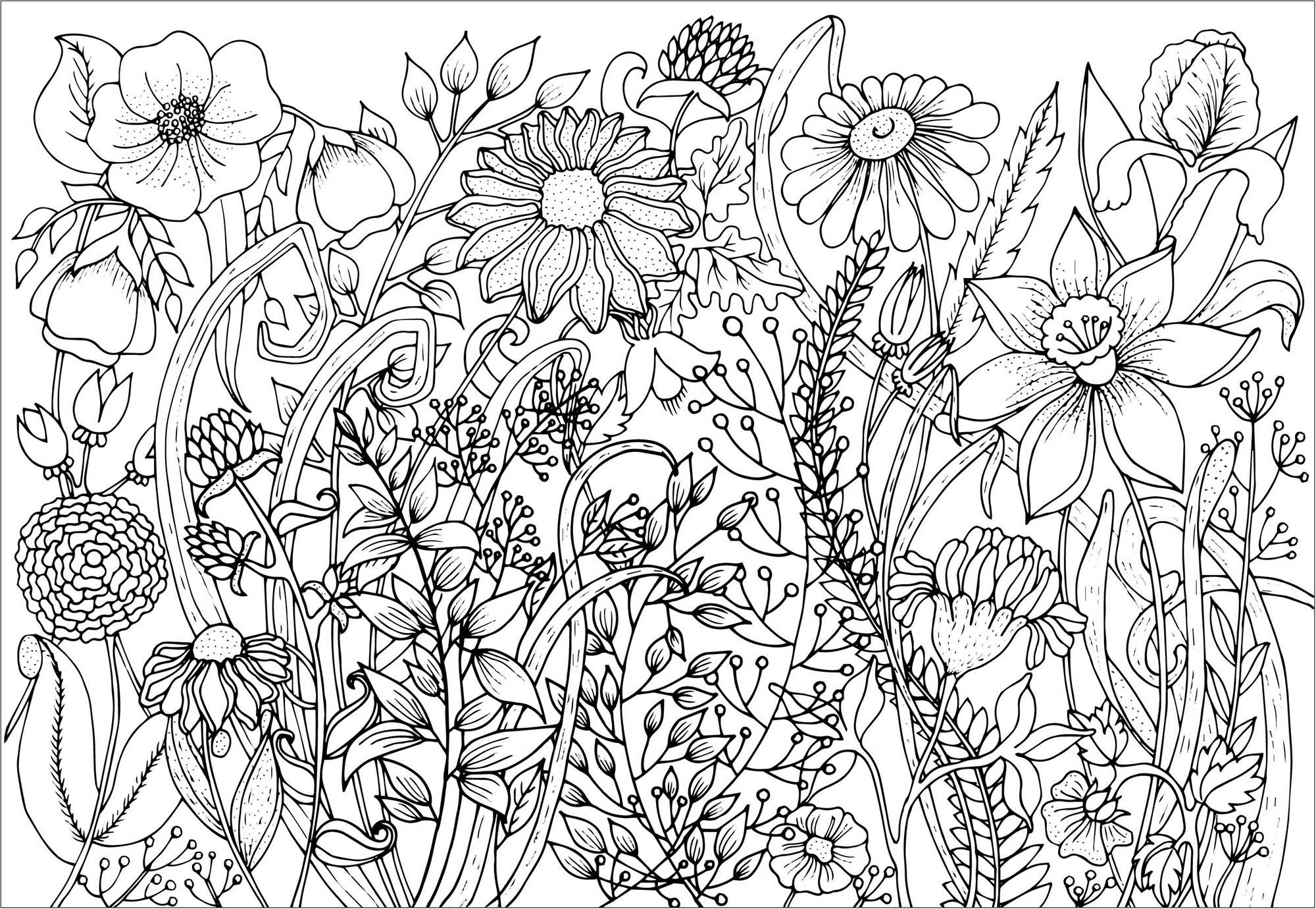 Colorear para Adultos : Flores y vegetación - 2