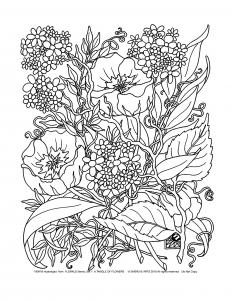 Flores y vegetacion 24909