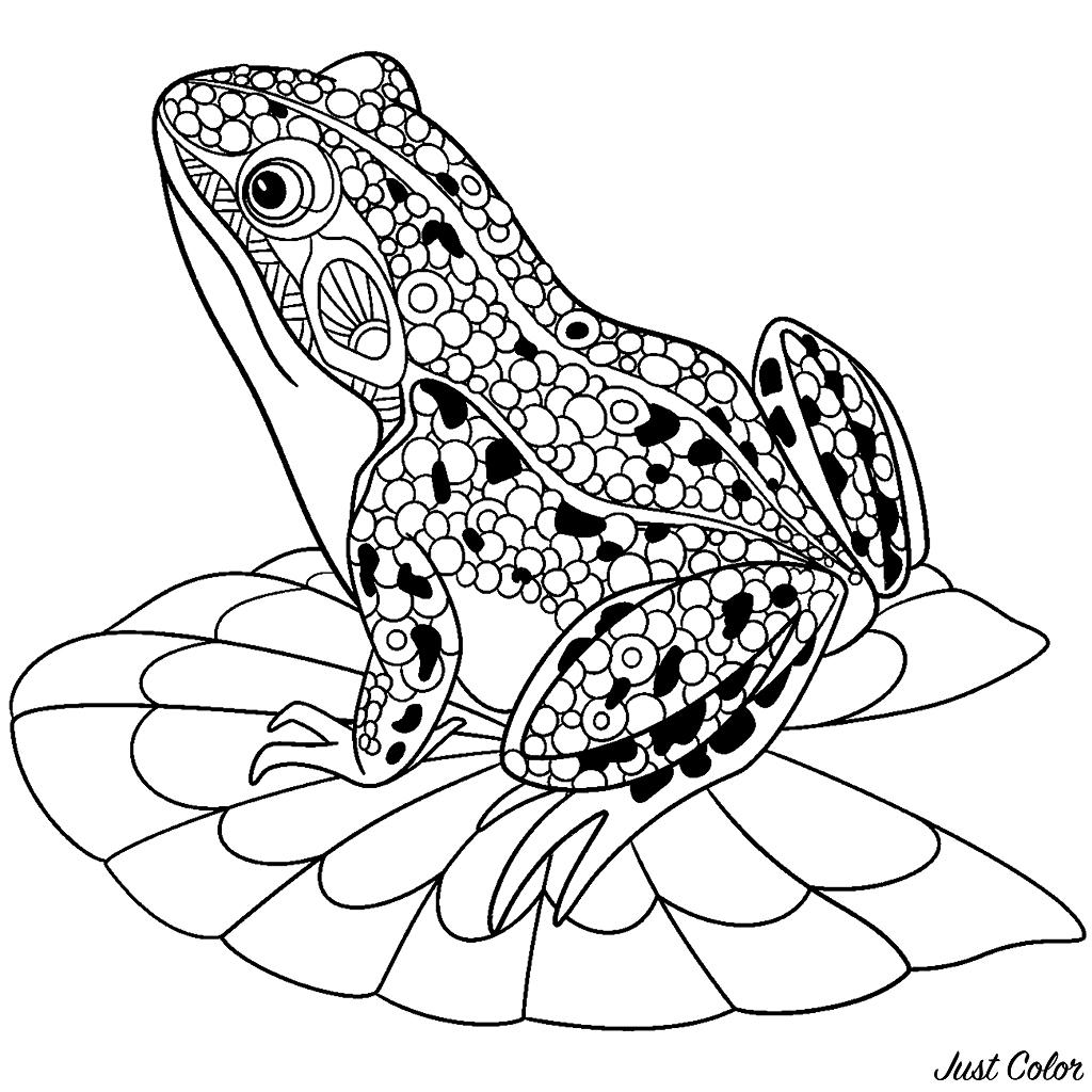 Colorear para adultos  : Ranas - 1