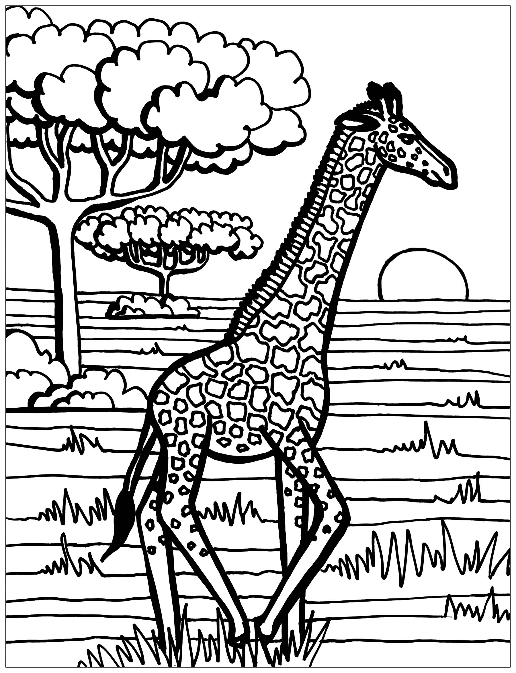 Colorear para Adultos : Jirafas - 4
