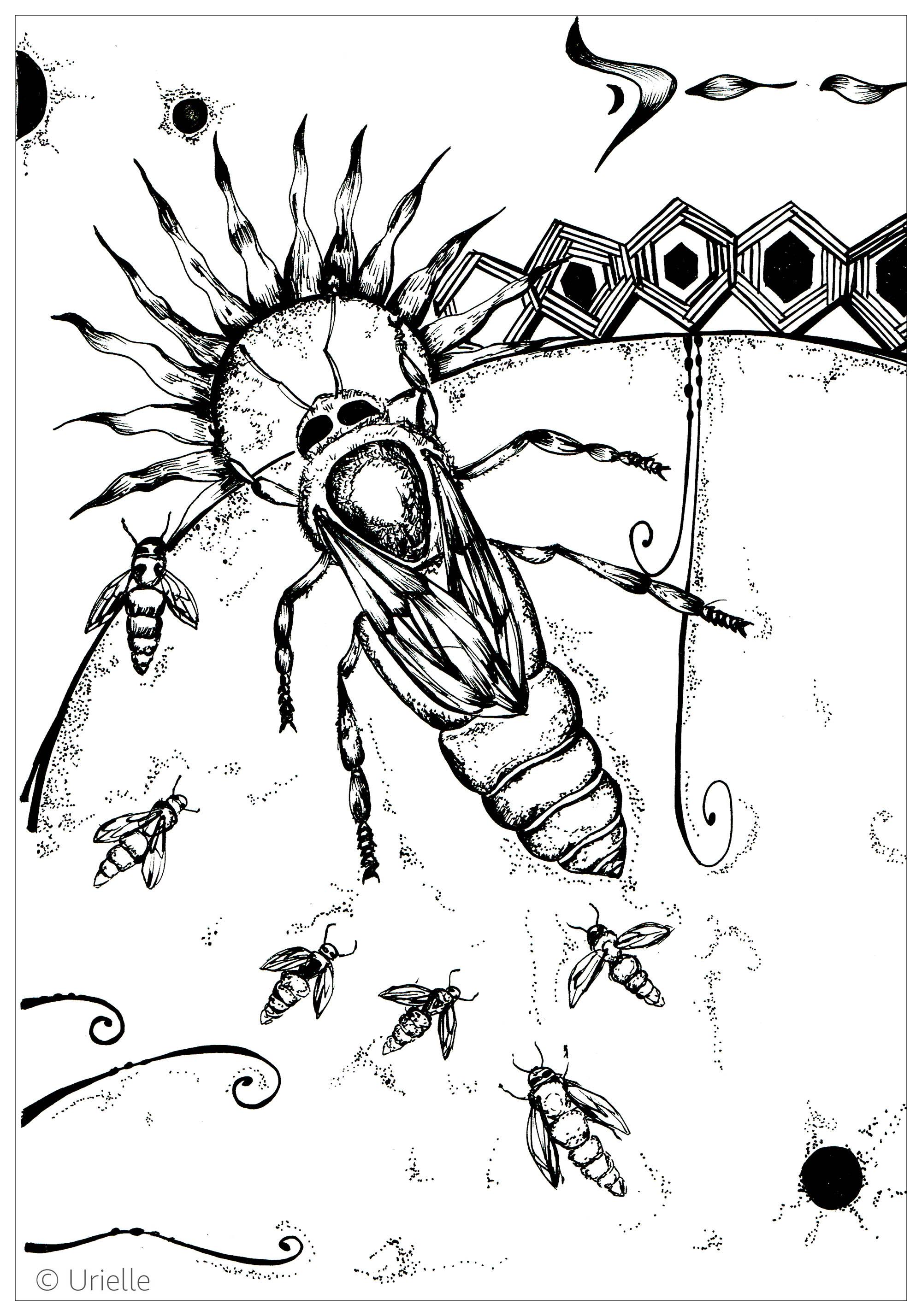 Insectos 17781 - Mariposas e insectos - Colorear para Adultos