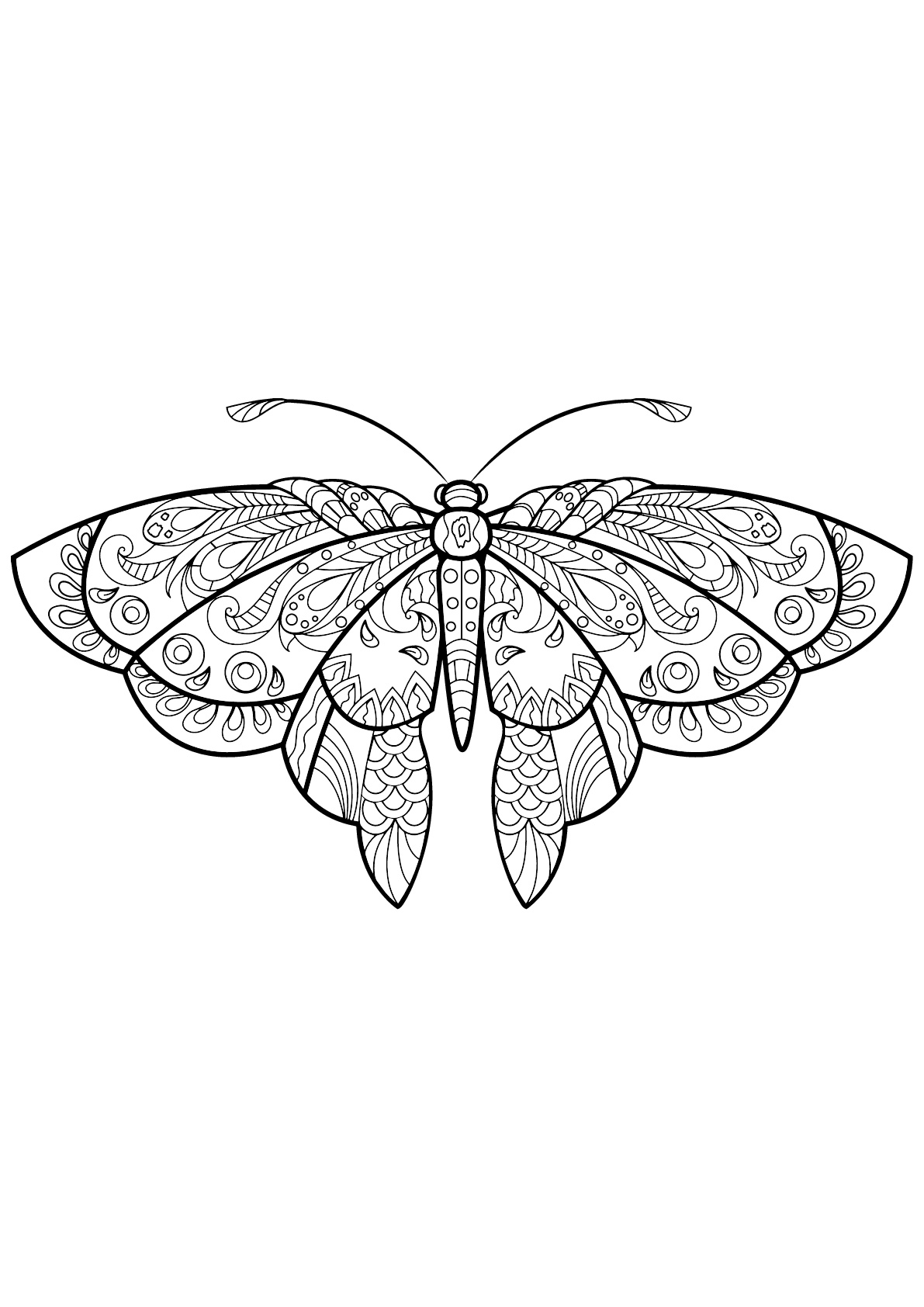 Colorear para adultos  : Insectos - 14