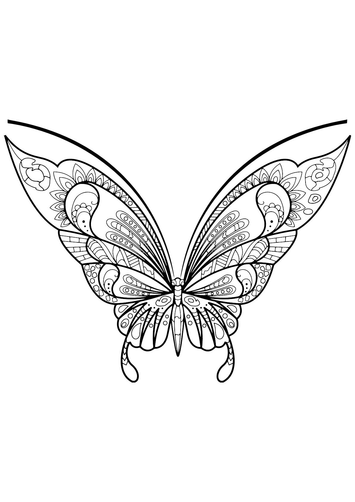 Insectos 79537   Mariposas e insectos - Colorear para adultos