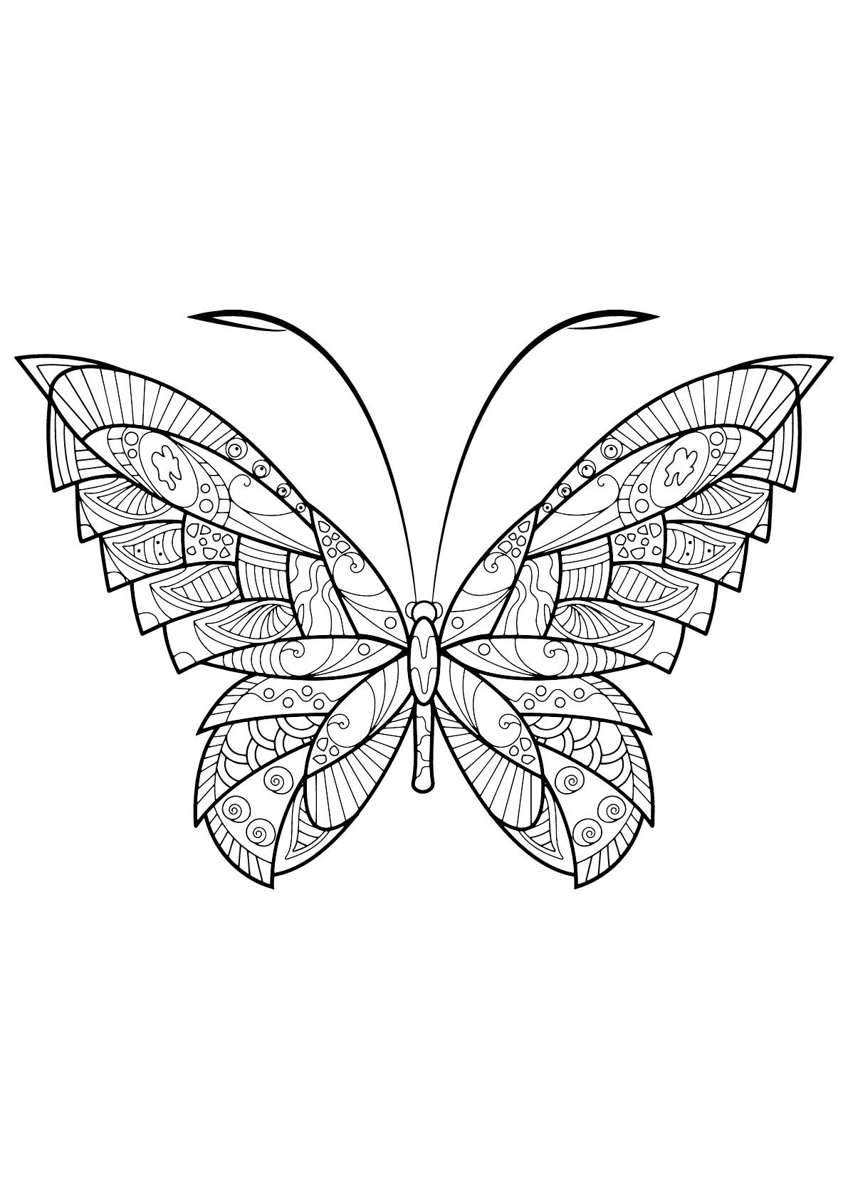 Insectos 80831   Mariposas e insectos - Colorear para adultos