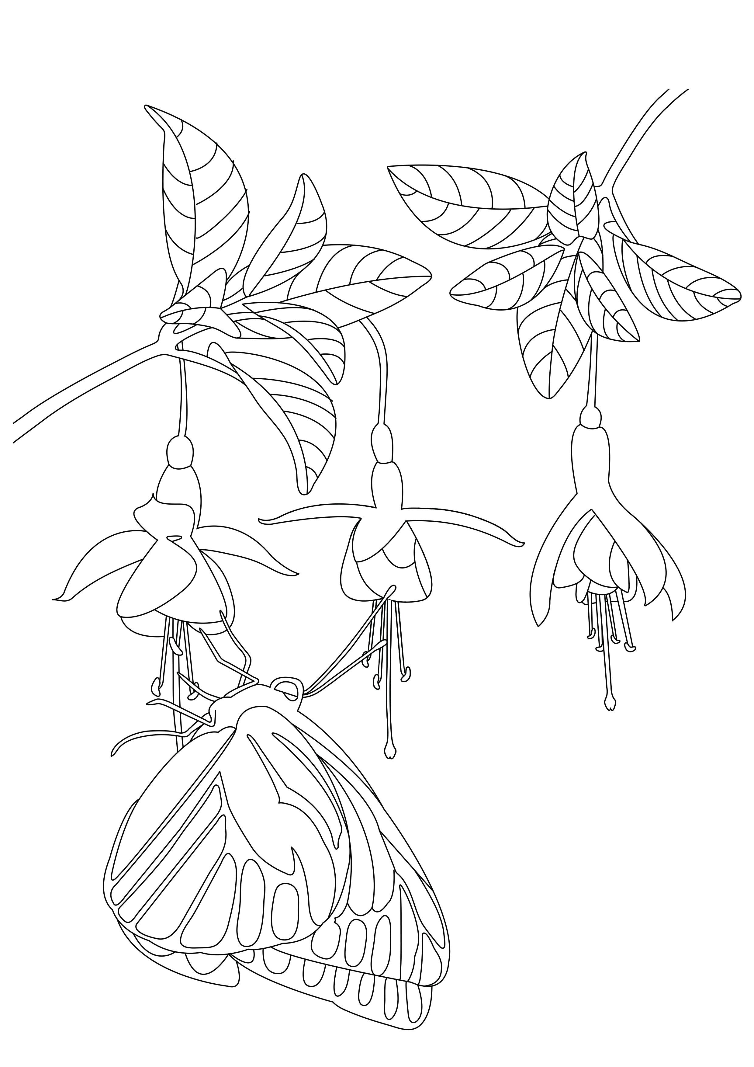 Insectos 85688 - Mariposas e insectos - Colorear para adultos