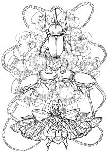 Mariposas e insectos 18299