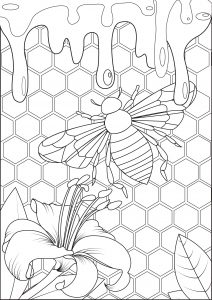 Mariposas e insectos 24174