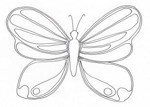 Insectos 16655