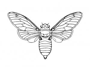 Insectos 68191