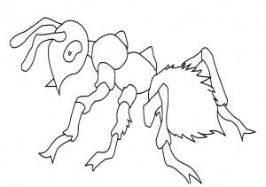 Insectos 7599