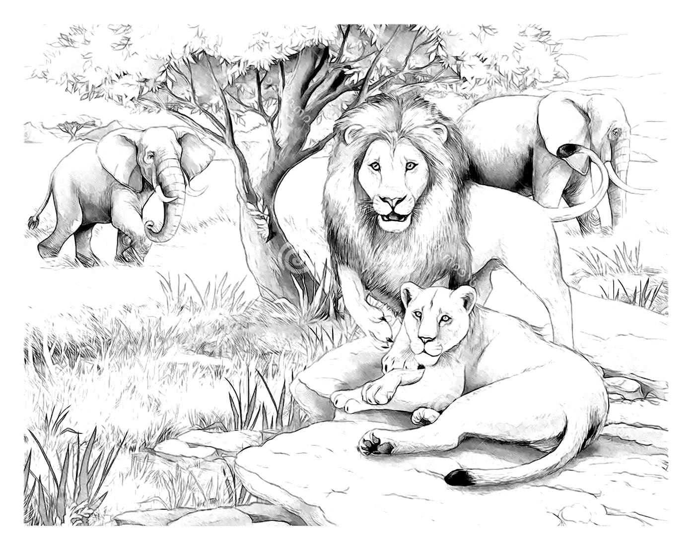 Coloriage Famille Africaine.Afrique Lions Afrique Coloriages Difficiles Pour Adultes