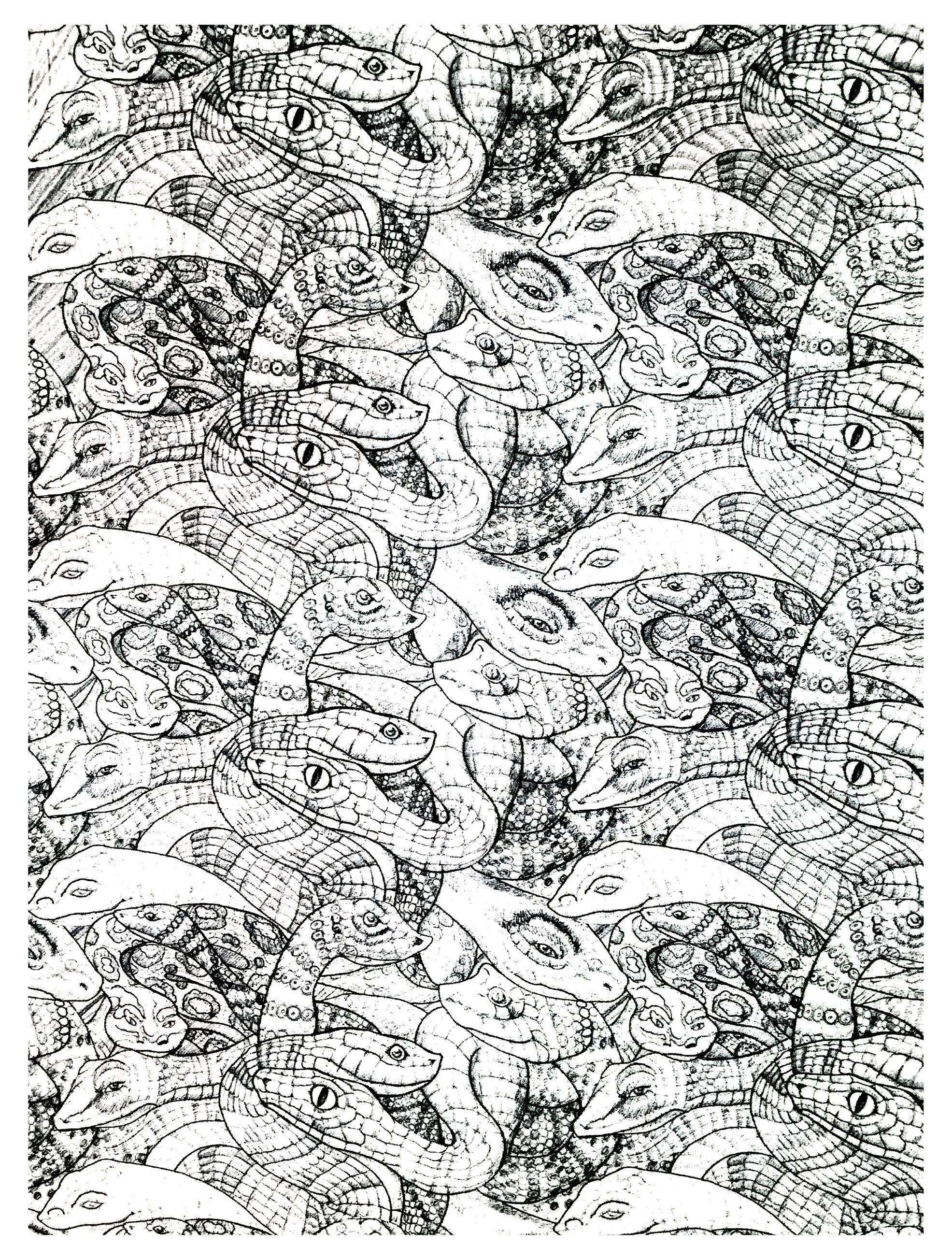 Nombreux serpents entremªlés  colorier mod¨le 2 niveau tr¨s difficile