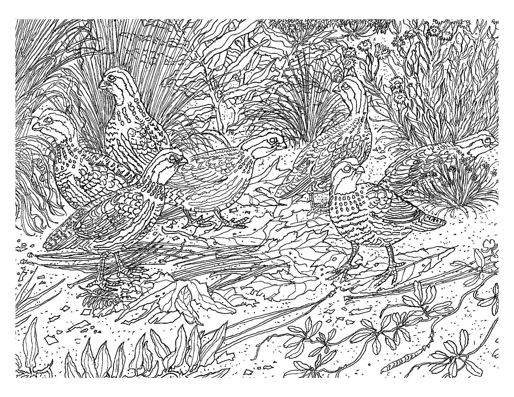 6 image=animaux coloriage difficile oiseau 1