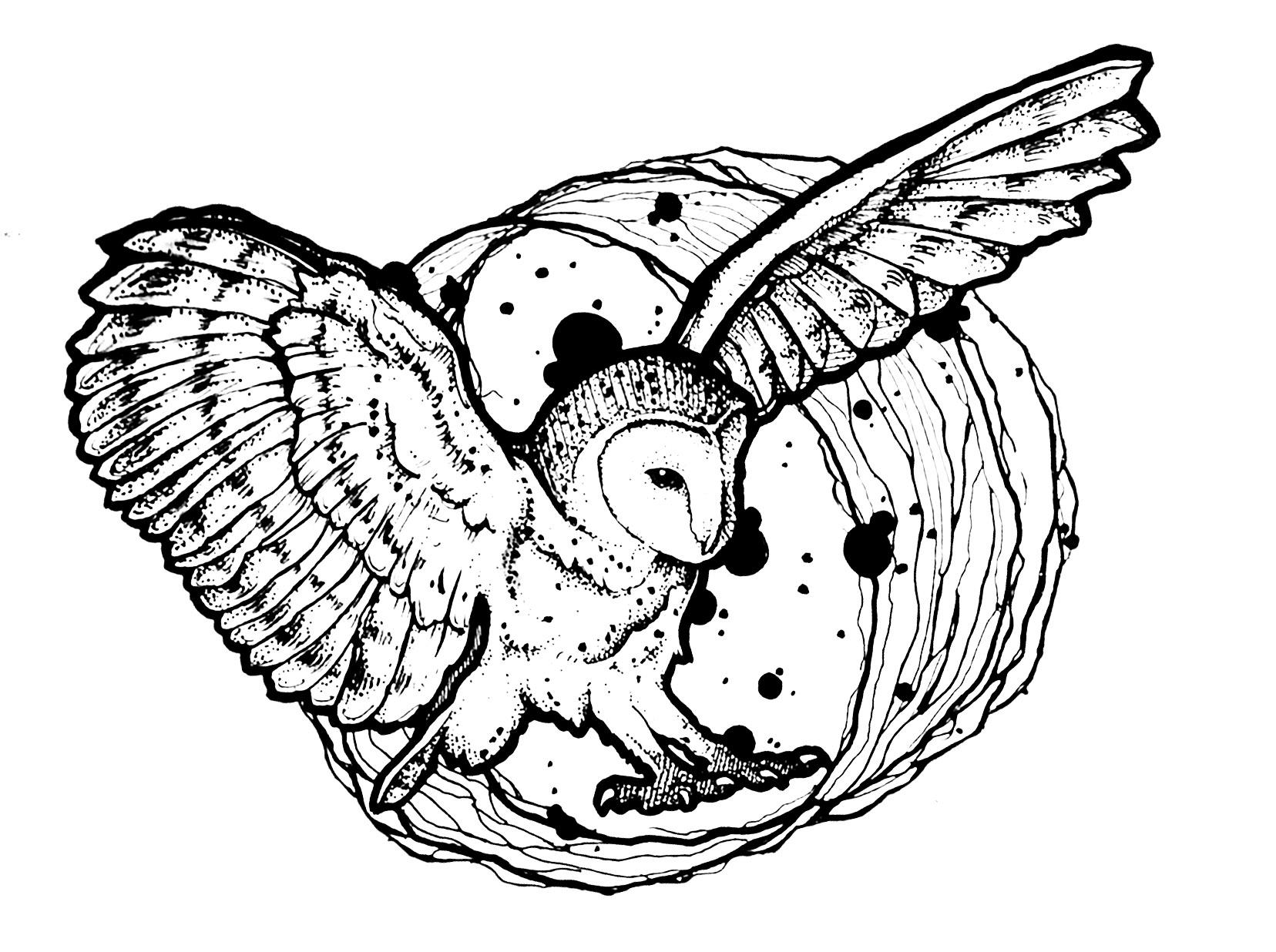 Hibou ailes deployees blog coloriages difficiles pour adultes - Coloriage de hibou ...