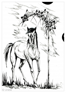 coloriage adulte cheval