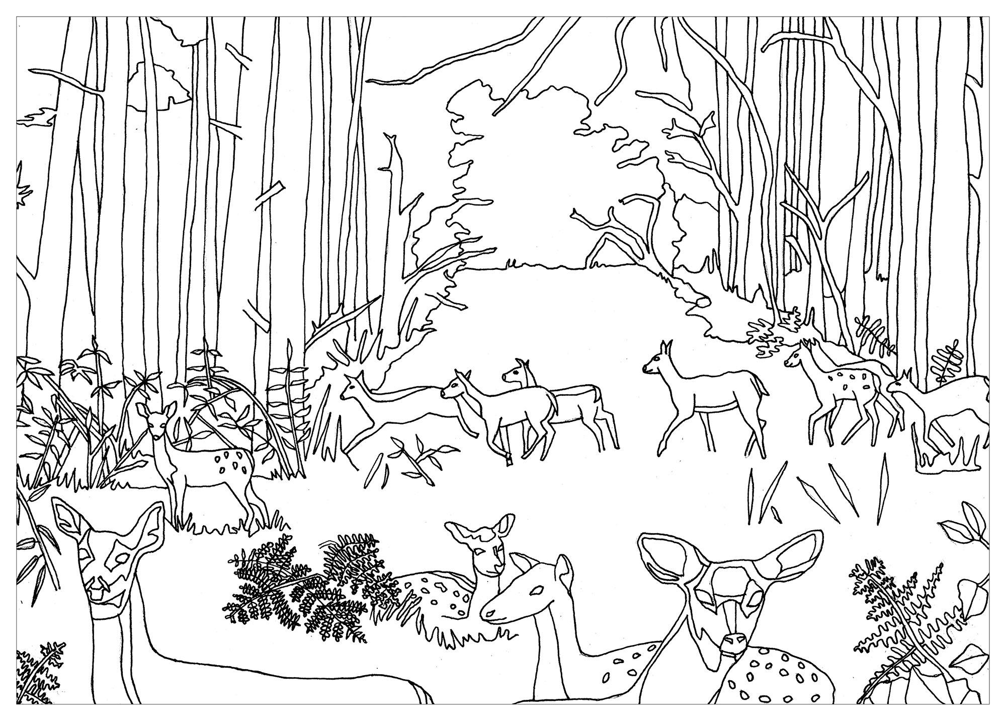 Biches et Faons dans la forêt