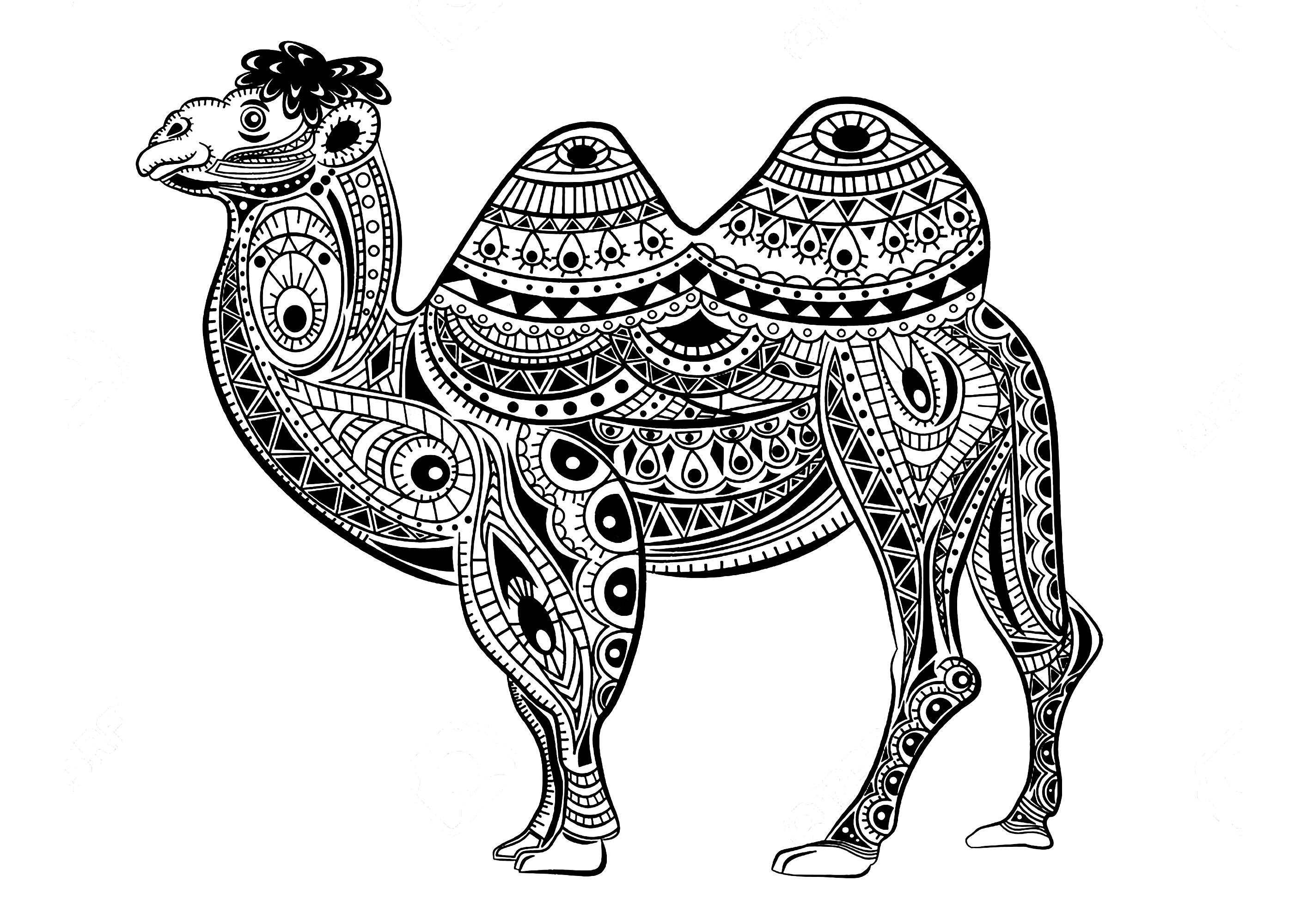 Chameau avec motifs Zentangle - Chameaux et Dromadaires ...