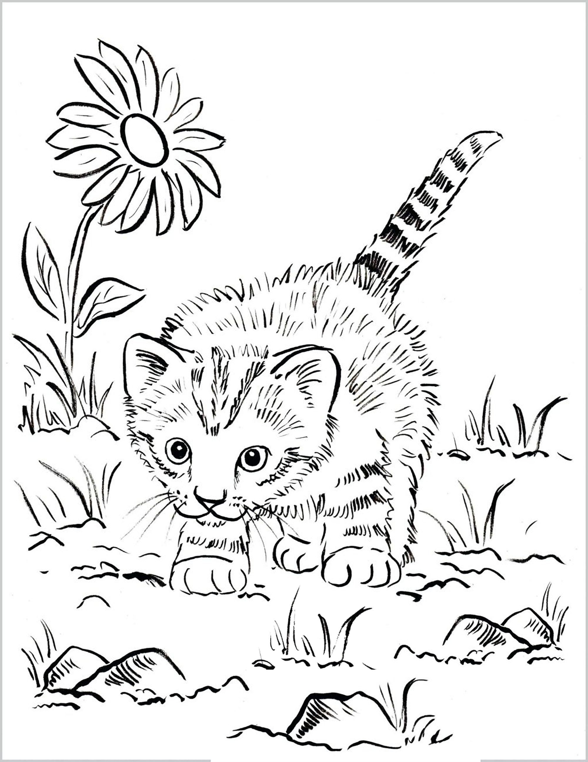 Petit chat 'chassant' dans le jardin