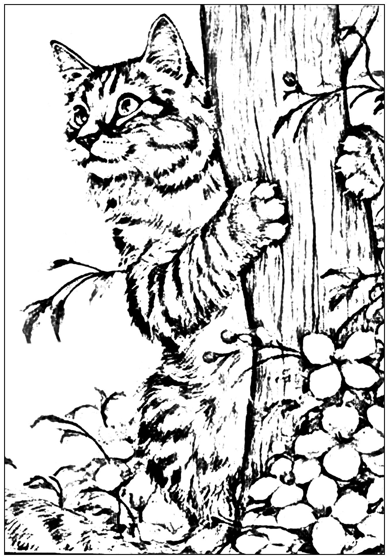 Chaton jouant dans le jardin chats coloriages for Immagini gatti da colorare