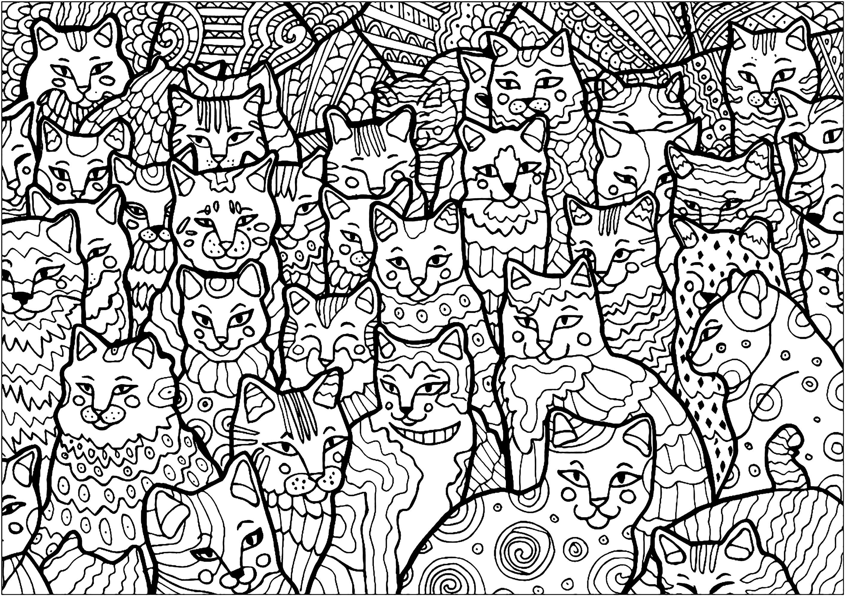 Ces chats occupent la totalité de la page, à vous de les colorier !