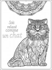 Coloriage adulte soit relax comme un chat par elena besedina
