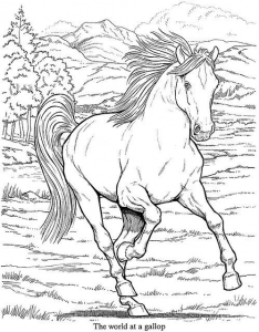 Coloriage adulte animaux cheval