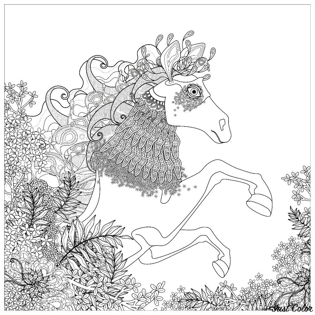 Coloriage Cheval Pour Adulte.Cheval Et Elements Floraux Chevaux Coloriages Difficiles Pour