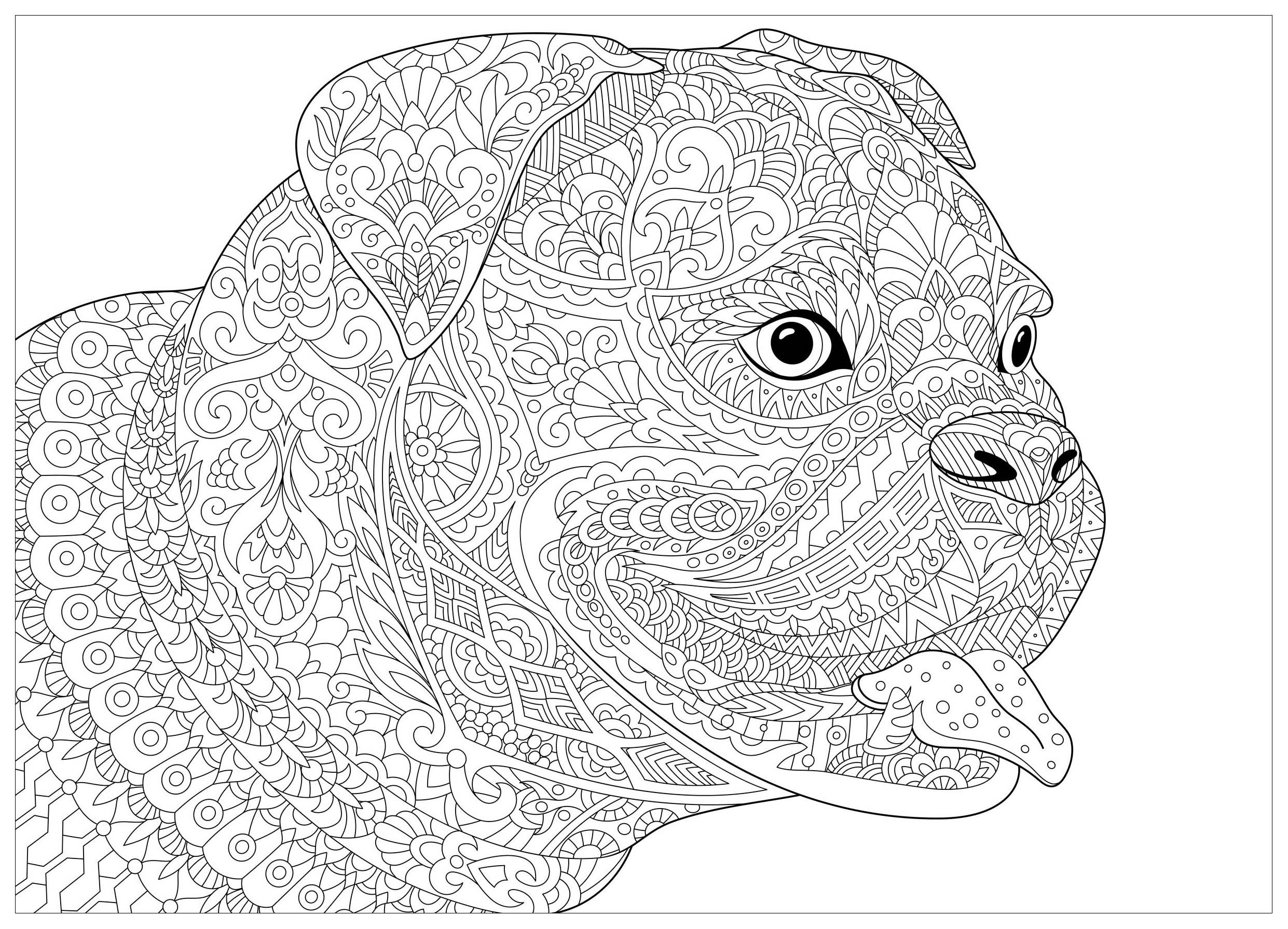 Chien french bulldog chiens coloriages difficiles pour - Coloriage boxer ...
