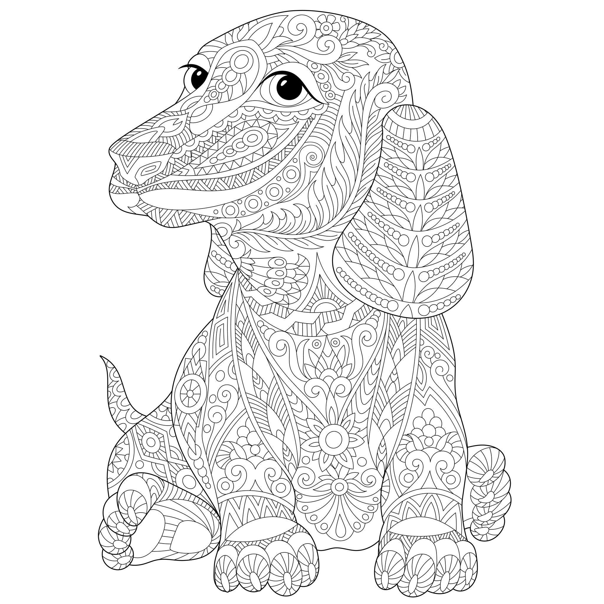 Chien teckel chiens coloriages difficiles pour adultes - Coloriage de chien ...