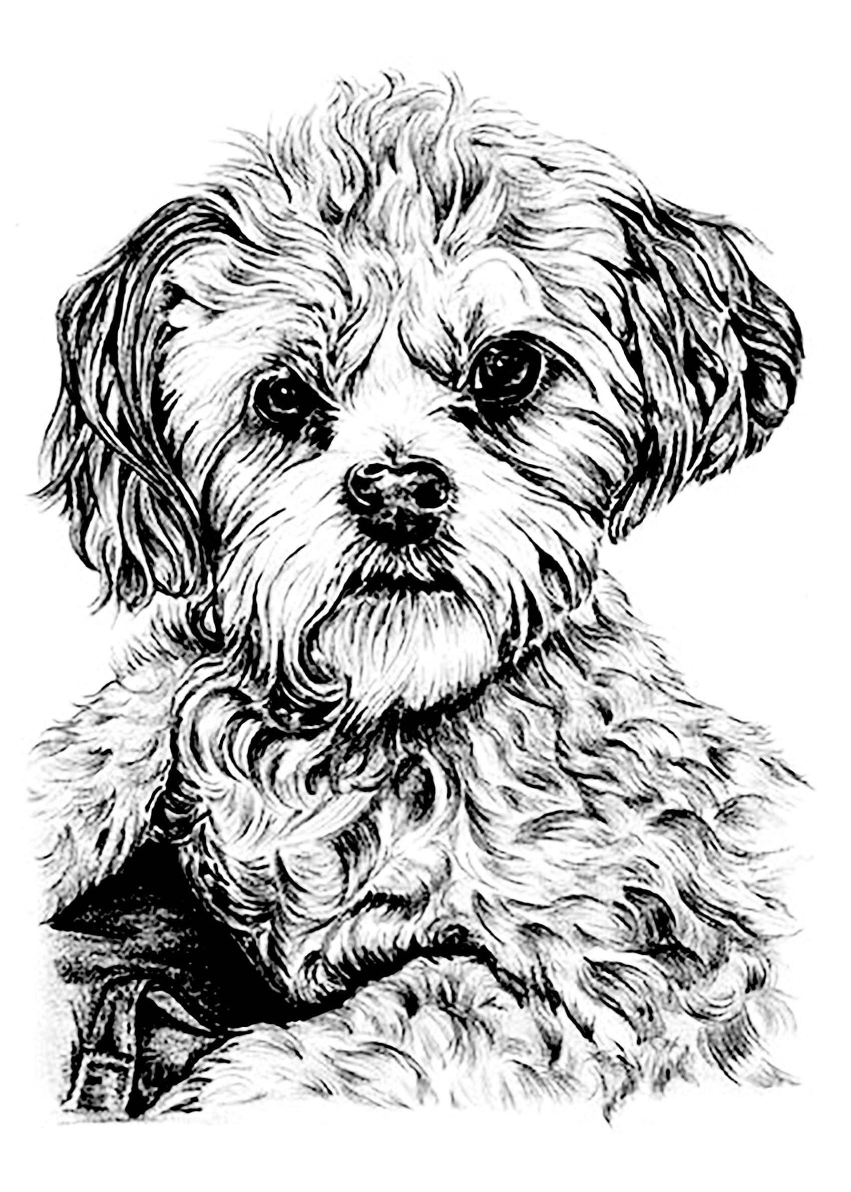 Chien chiens coloriages difficiles pour adultes - Coloriage de chien ...