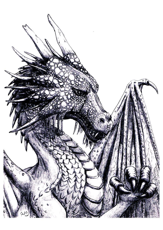 Majestueux Dragon aux écailles complexes (donc parfait pour le coloriage !)