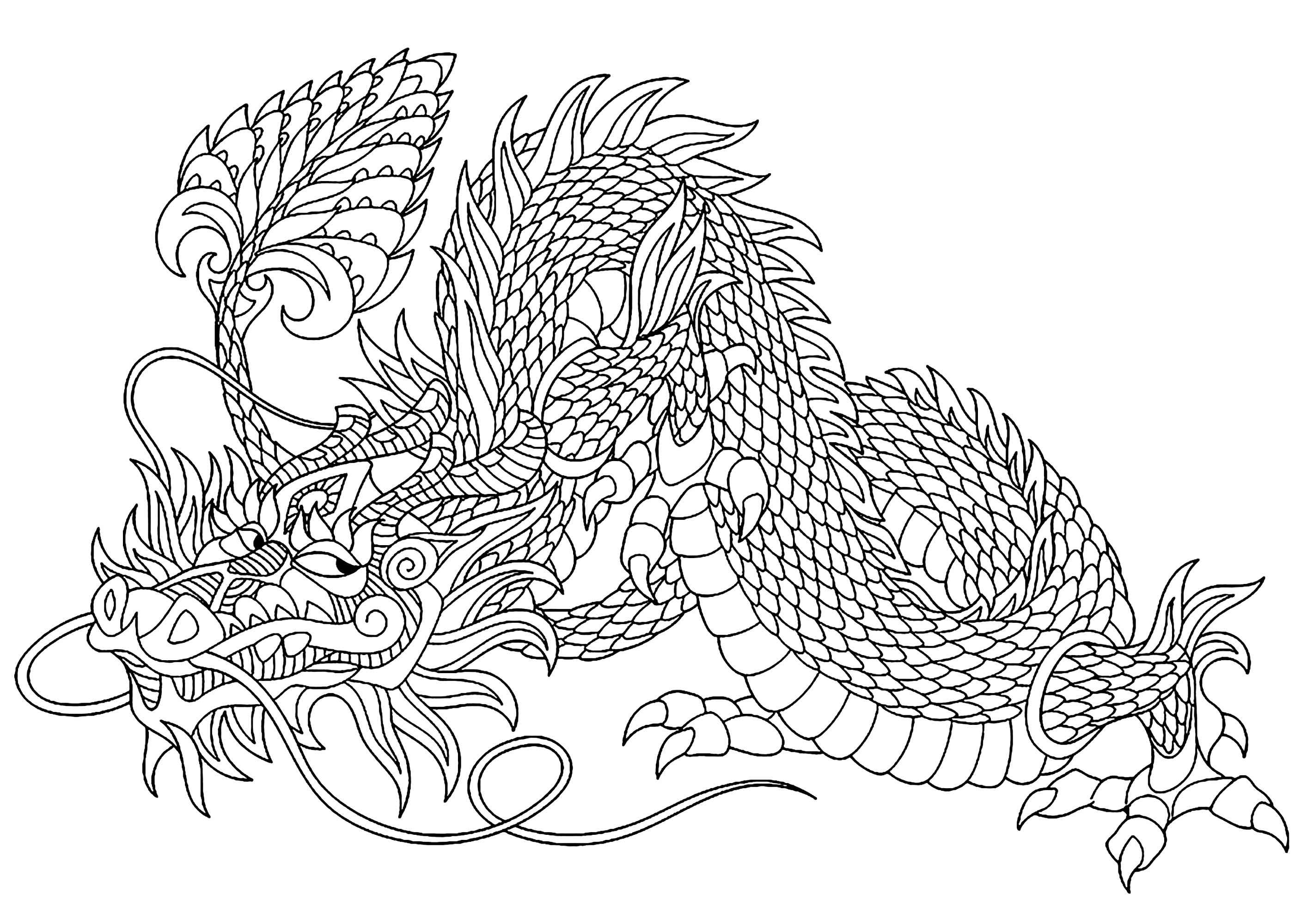Dragon malicieux dragons coloriages difficiles pour - Coloriages de dragons ...