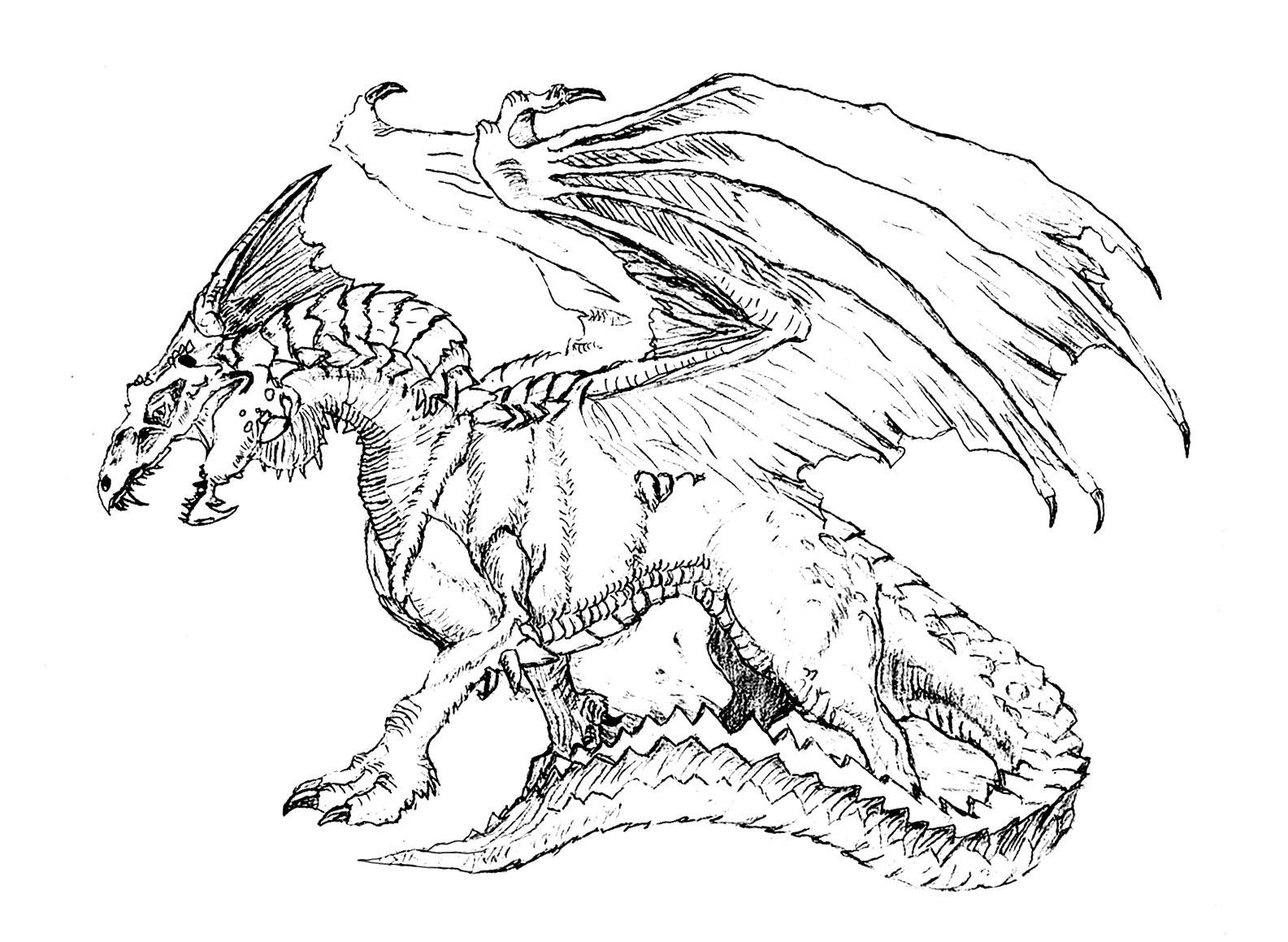 Effrayant Dragon Dragons Coloriages Difficiles Pour Adultes