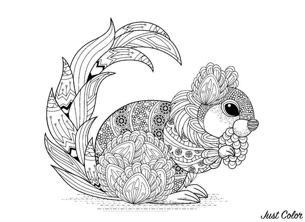 Ecureuil Avec Motifs Ecureuils Et Rongeurs Coloriages